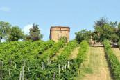 Piede-Franco-Le-Ghiarelle-1280x700